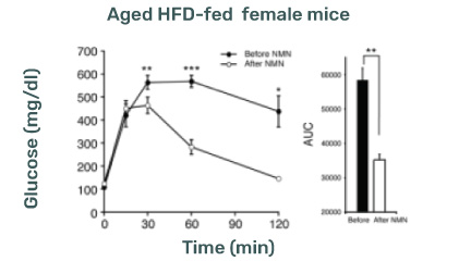 NMN Supplementation and Type 2 Diabetic female mice
