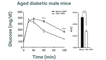 NMN Supplementation and Type 2 Diabetic male mice