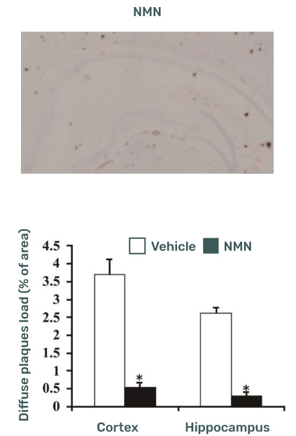 NMN treatment diffuse plaques load in mice
