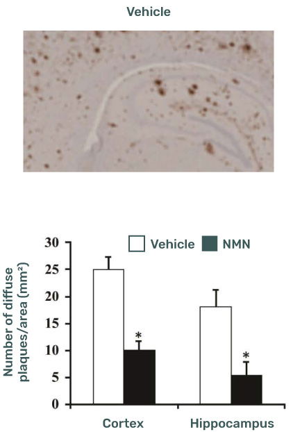 data prove that NMN treatment greatly reduces Alzheimer disease in mice